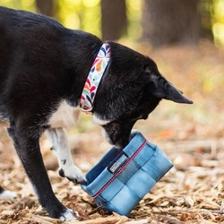 Waterbestendige Hondenhalsband Color Splash