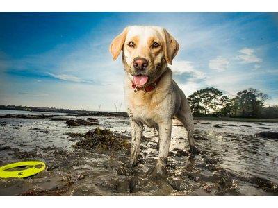 Extra Sterke Frisbee voor Honden