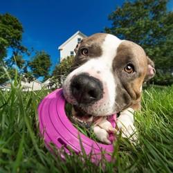 Sterke Frisbee voor Honden