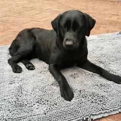 Doggy Dry Droogmat voor Honden