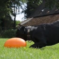 Dog Comet Sterk & Drijvend Honden Speelgoed
