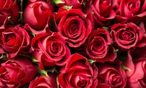 Woodwick Rose