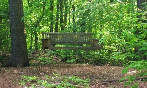 Woodwick Woodland Shade