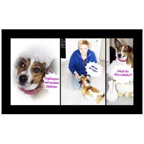 Nalas - Seife für den Hund