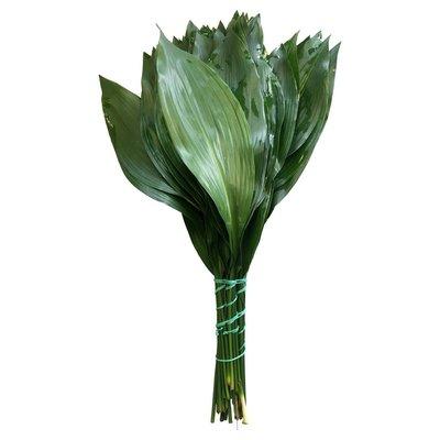 10 Aspidistra Blätter