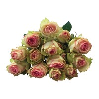 10 Rosen Esperance