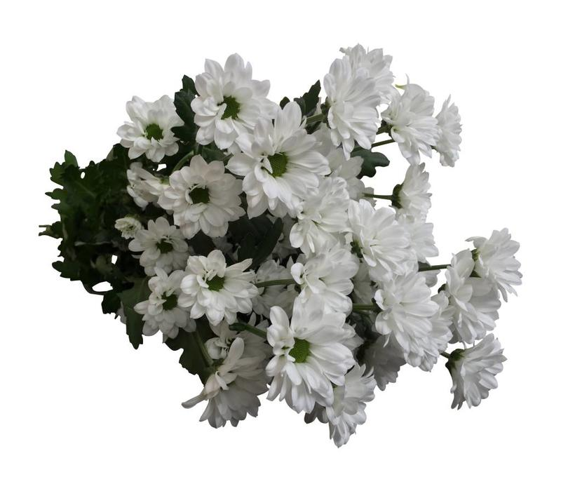 5 Santini Bouncer (Weiß)