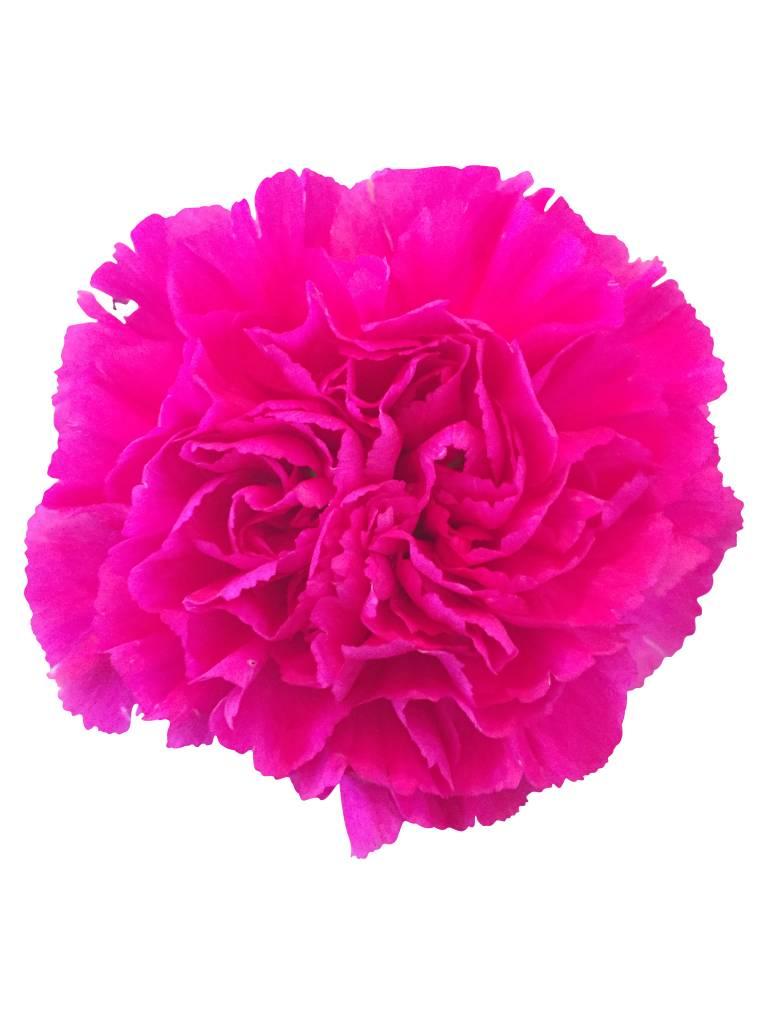 10 edelnelken in pink bezahlbare blumen g nstig online verschicken bezahlbare. Black Bedroom Furniture Sets. Home Design Ideas