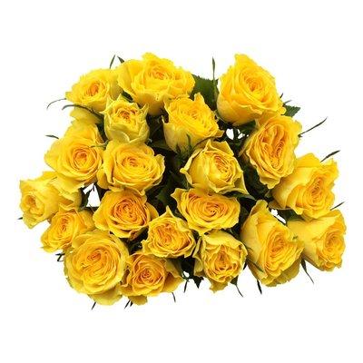 10 Rosen Gelb Solero