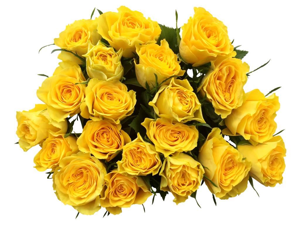 10 gelbe rosen im bund online kaufen bezahlbare bezahlbare. Black Bedroom Furniture Sets. Home Design Ideas