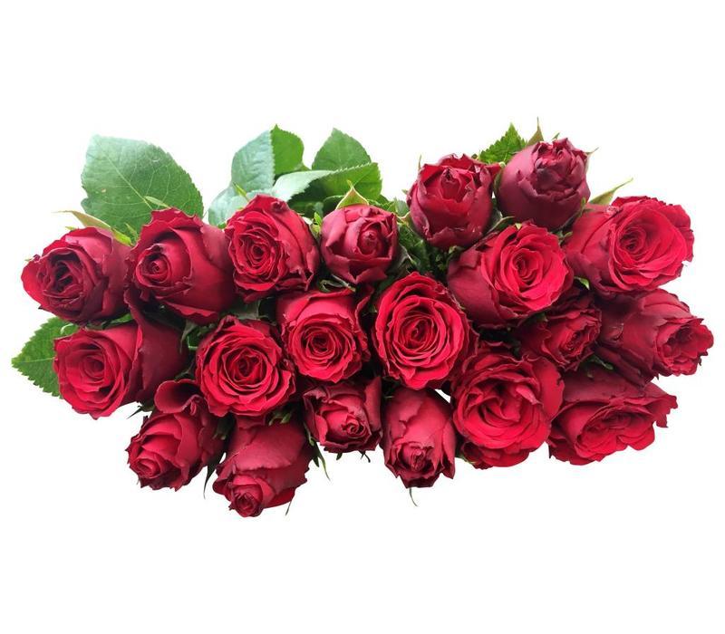 10 Rosen Rot