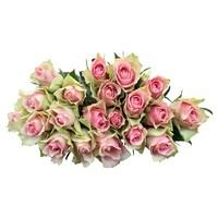 10 Rosen Rosa Belle Rose