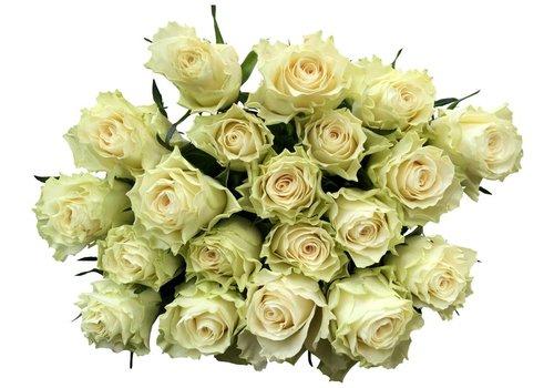 10 Rosen Creme-Weiß Solsy