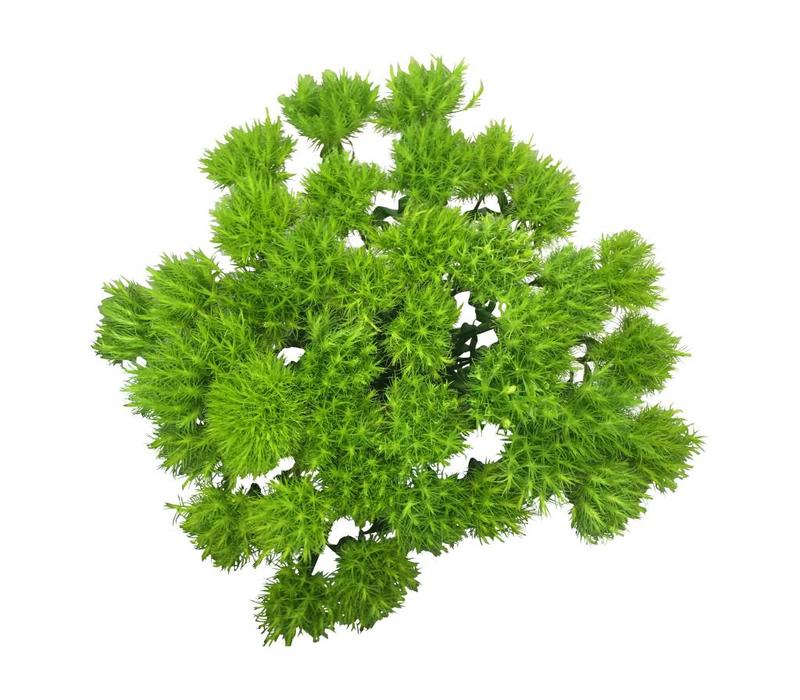 10 Bartnelken - Green Trick