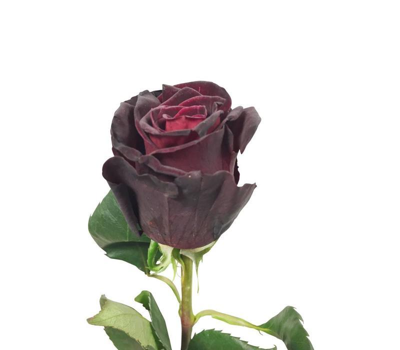 10 Rosen Black Baccara