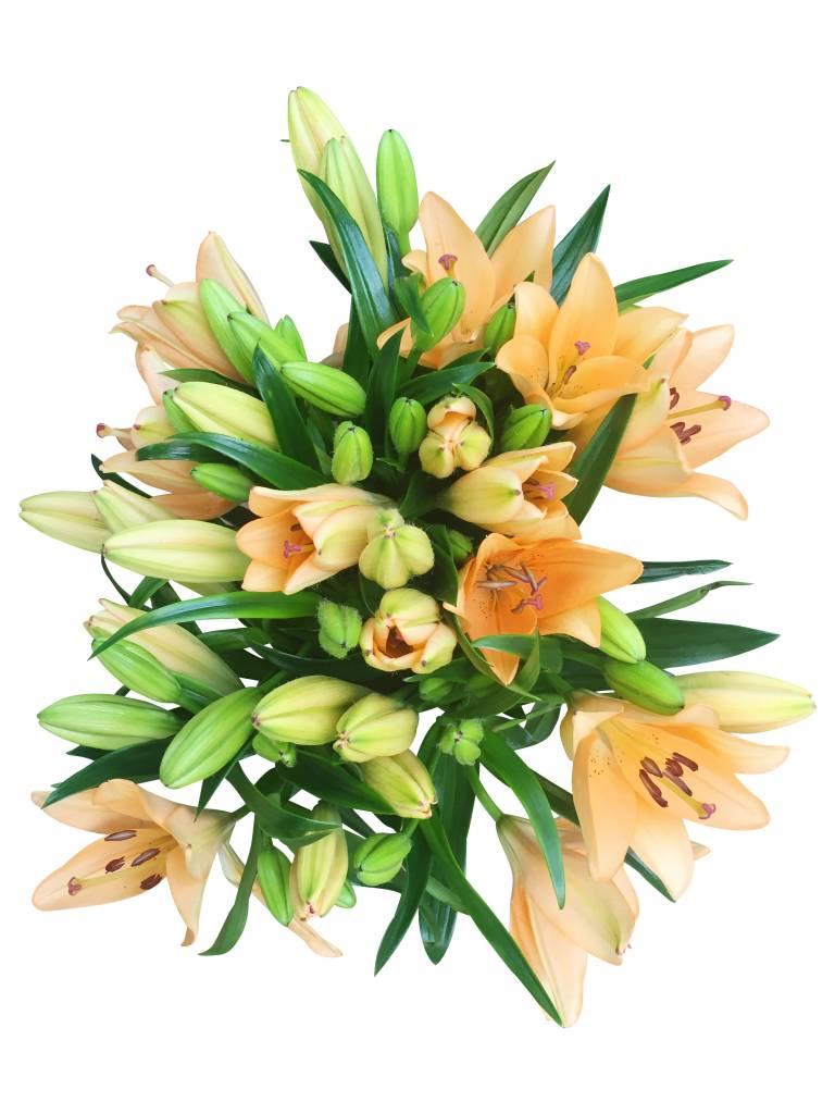 premium lilien in orange online verschicken bezahlbare. Black Bedroom Furniture Sets. Home Design Ideas