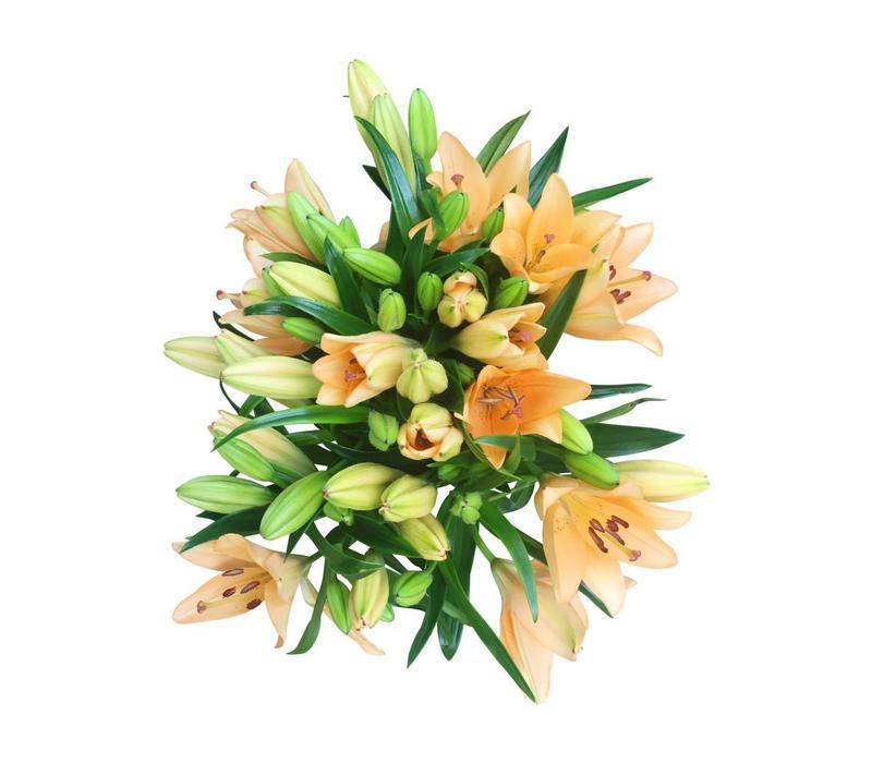 10 Lilien Orange
