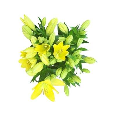 10 Lilien Gelb