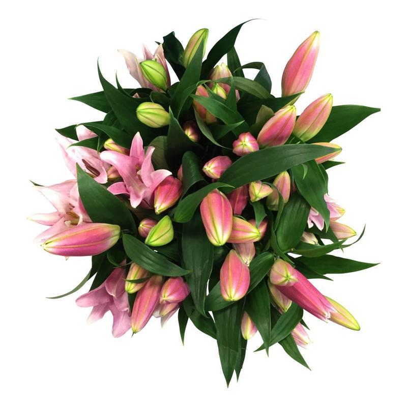 10 Lilien Rosa