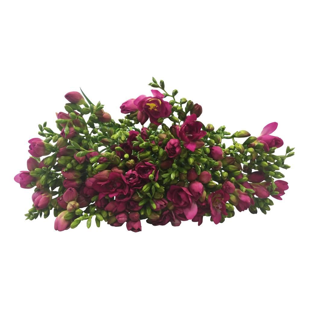 auch aufgrund ihres angenehmen duftes sind freesien sehr beliebte schnittblumen bezahlbare. Black Bedroom Furniture Sets. Home Design Ideas