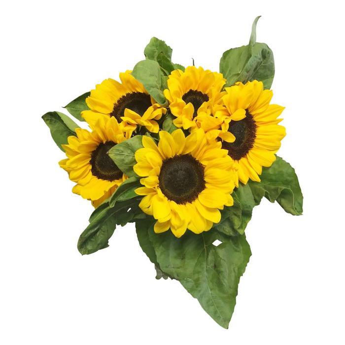 Blumen der Saison