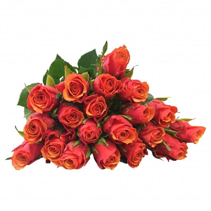 10 Rosen Orange Espana