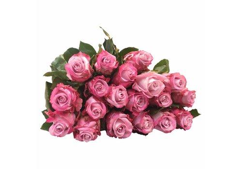 10 Rosen Rosa-Flieder Maritim