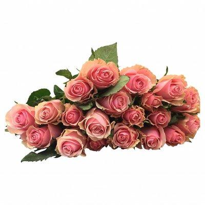 10 Rosen Rosa Celeb