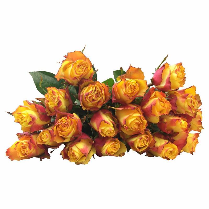 10 Rosen Gelb-Orange Newsflash