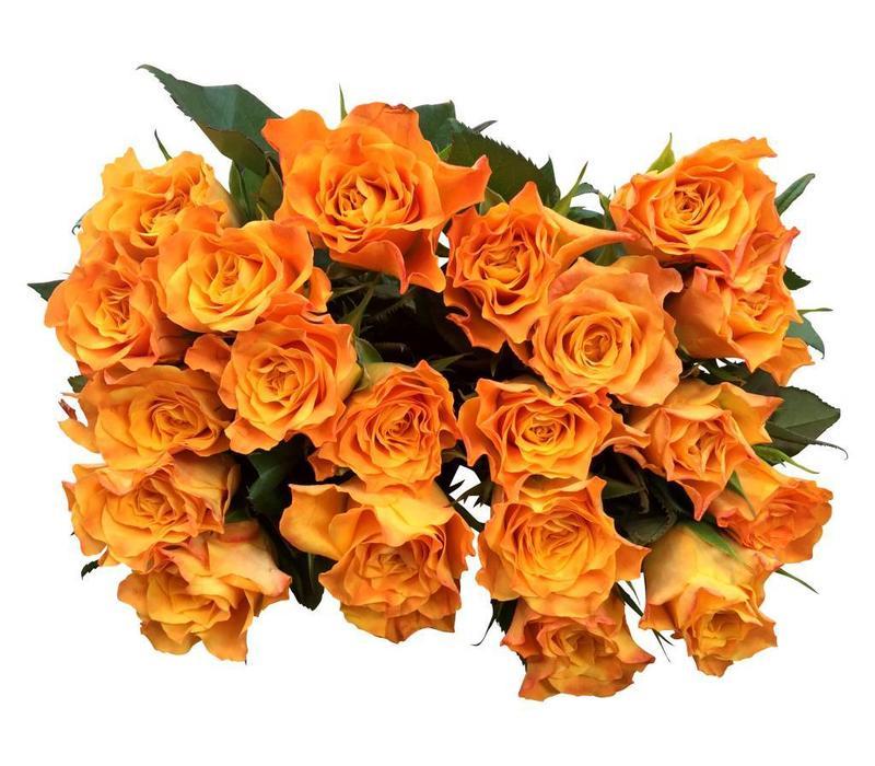 10 Rosen Orange Marie Claire