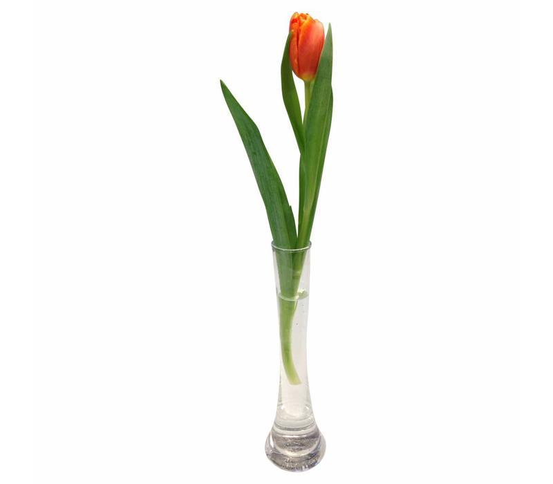 10 Tulpen Pako