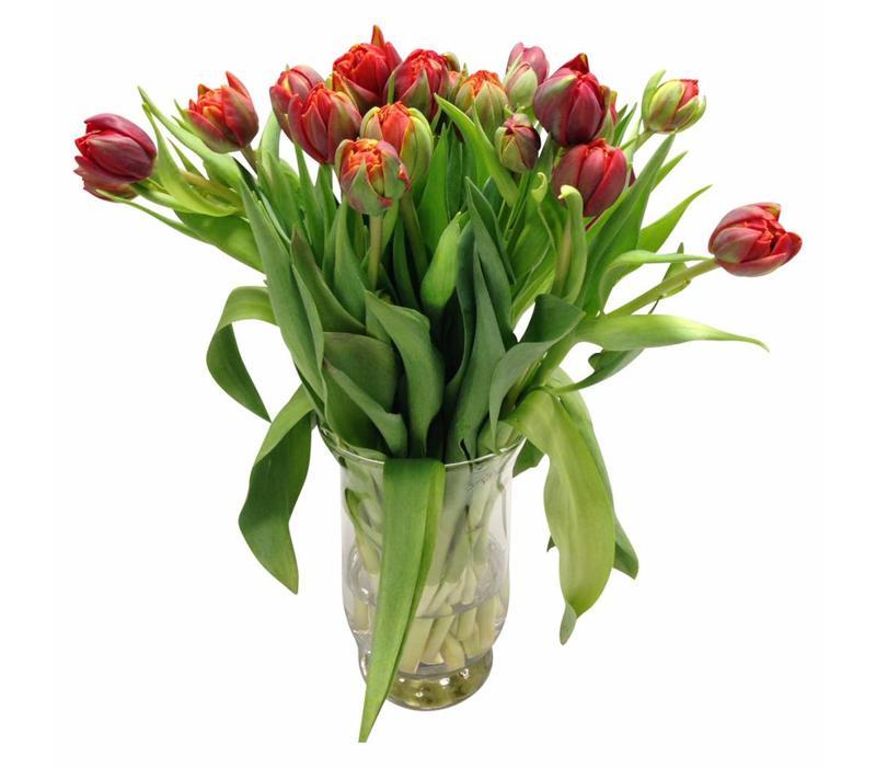 10 Tulpen Red Princess