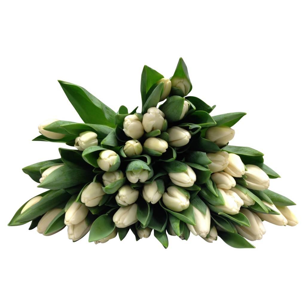 frische tulpen im bund online bestellen bei bezahlbare blumen bezahlbare. Black Bedroom Furniture Sets. Home Design Ideas