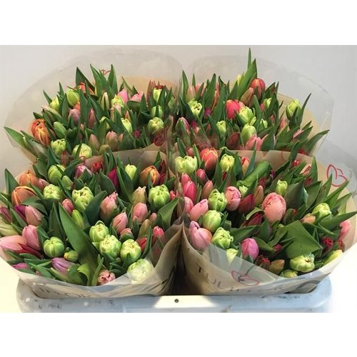als botschafter des fr hlings bringt ein strau tulpen freude bezahlbare. Black Bedroom Furniture Sets. Home Design Ideas