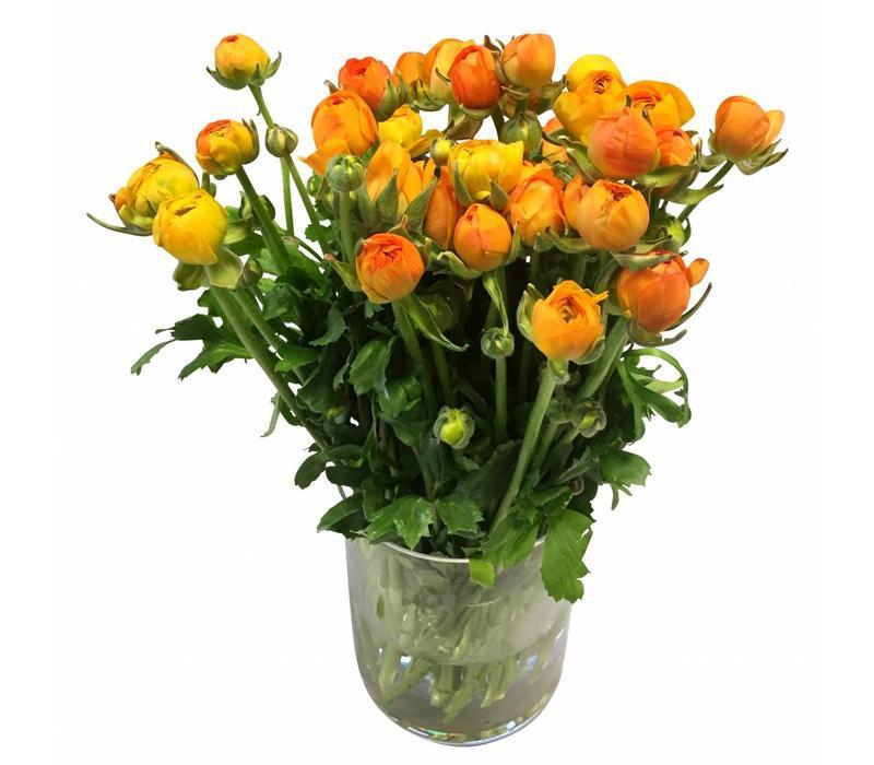 10 Ranunkeln Elegance Orange