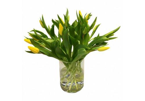 10 Tulpen Strong Gold