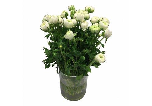 10 Ranunkeln Elegance Weiß