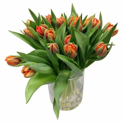 10 Tulpen Orange Princess (Gefüllt)