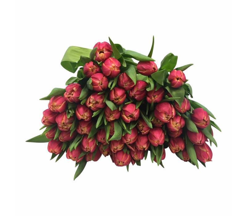 10 Tulpen Columbus (Gefüllt)