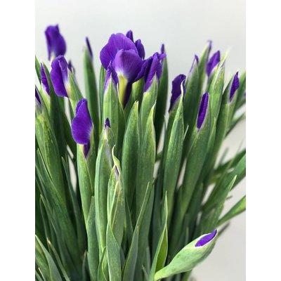 10 Iris