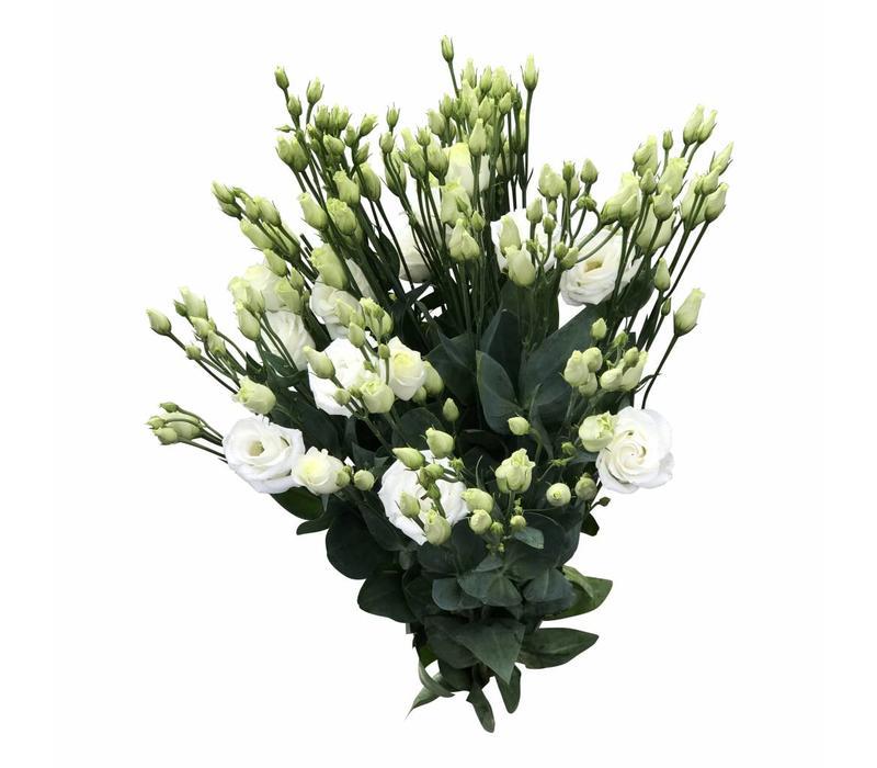 10 Eustoma Rosi White (Weiß)