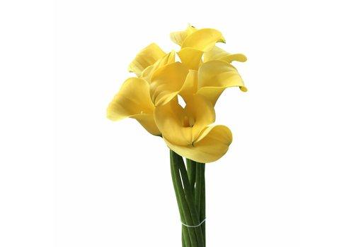 10 Calla Goldcup  (Gelb)