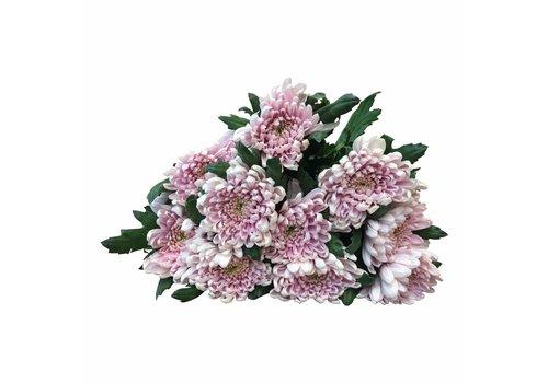 10 Deko Chrysanthemen  Rossano (Rosa)