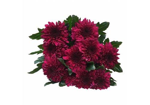 10 Deko Chrysanthemen   Barca (Pink)
