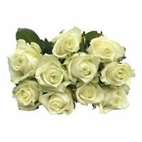 Flowerbox-Classic