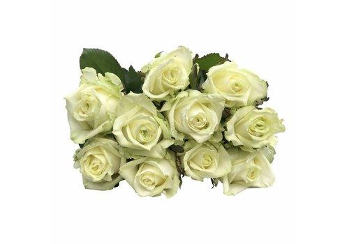 10 Premium-Rosen  White Naomi (Weiß-Grün)