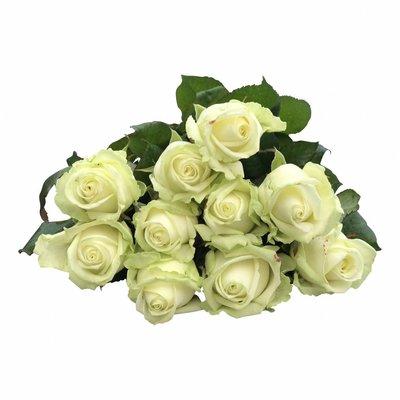 10 Premium-Rosen Weiß Avalanche