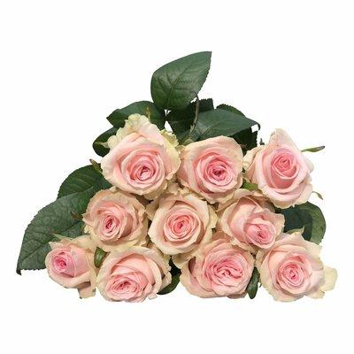 10 Premium-Rosen Sweet Dolomiti (Rosa)