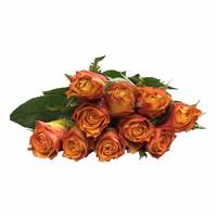 10 Premium-Rosen Downtown (Orange)