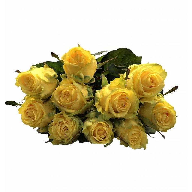 10 Premium Rosen Penny Lane (Gelb)